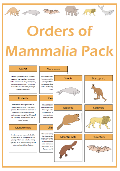 Orders of Mammalia | T...